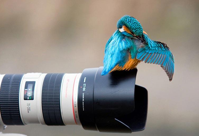 Amazing Animal Pictures 02