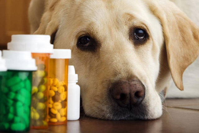 Dog-Specific Pain Medicines