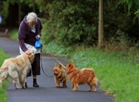 Hire Dog Walkers