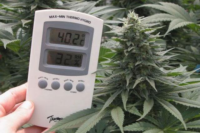 Overheating The Plants