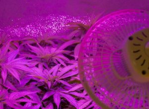 Using LED Grow Lights