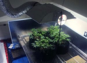 Temperature and Light Intensity in A Grow Room