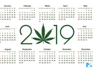 4 Cannabis Stocks Set To Fly High in 2019