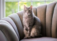 Easy Ways to Living Comfortably with Your Cat
