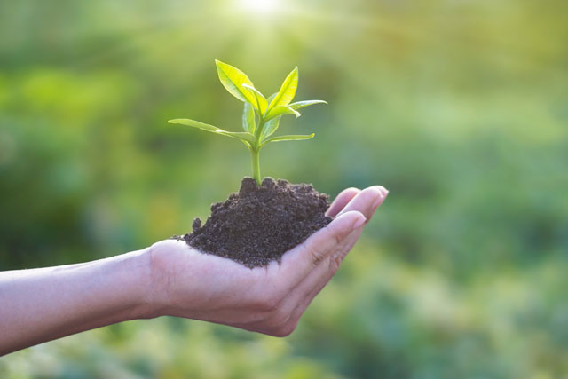 How to Plant a Tree That Will Thrive: Here Are 5 Simple Steps