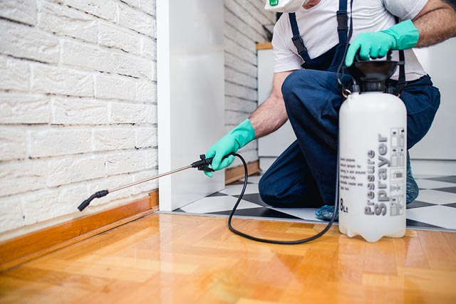 5 Things You Need To Know About Pest Control